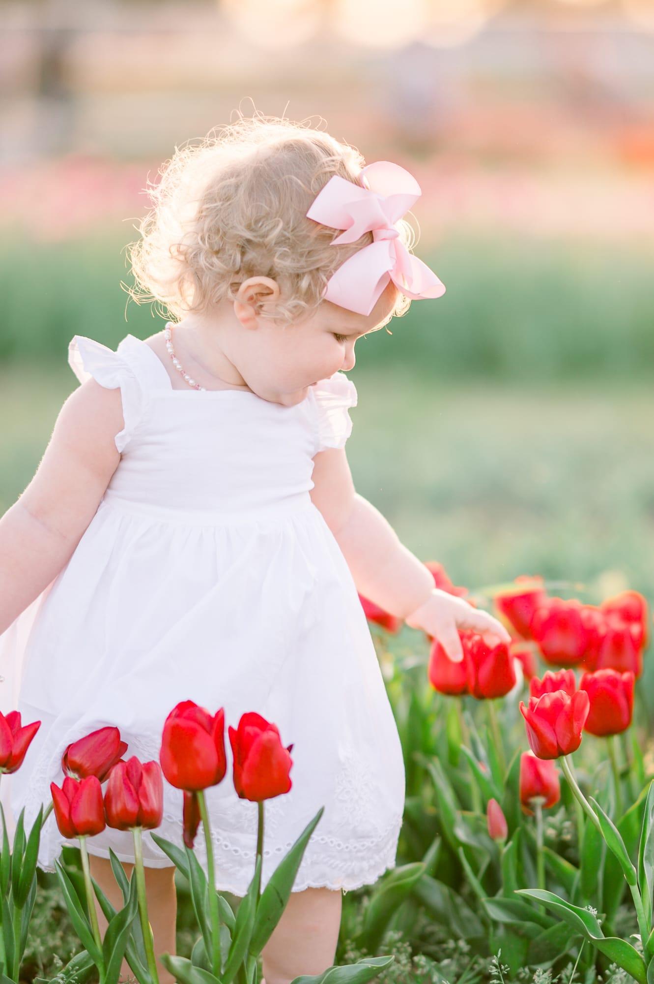 Dallas Tulip Farm baby Picture