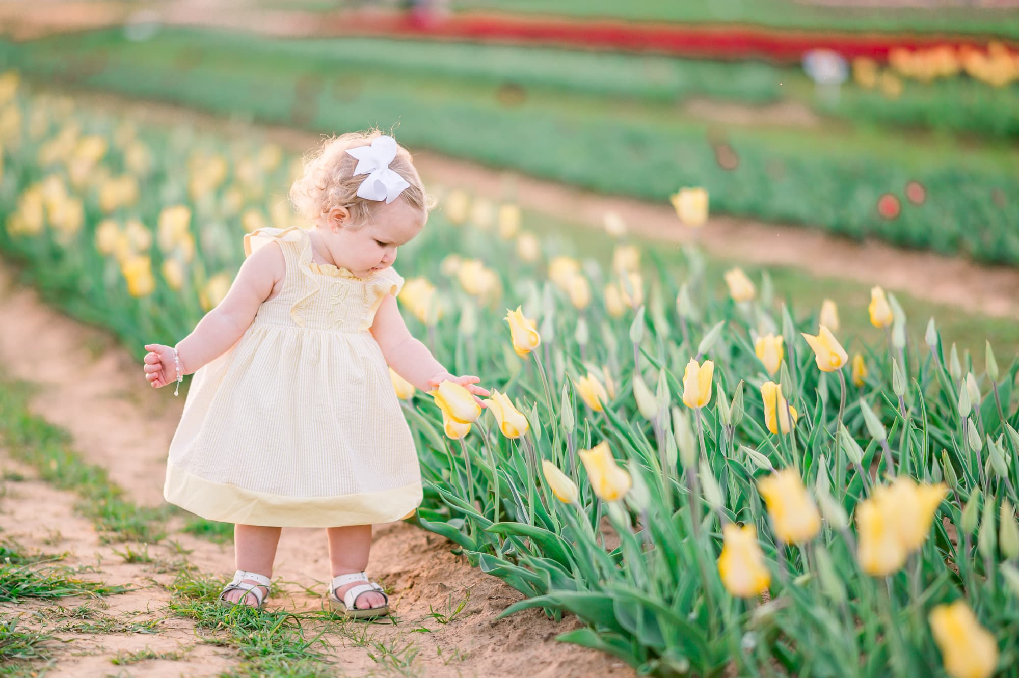 Spring portraits in the tulips
