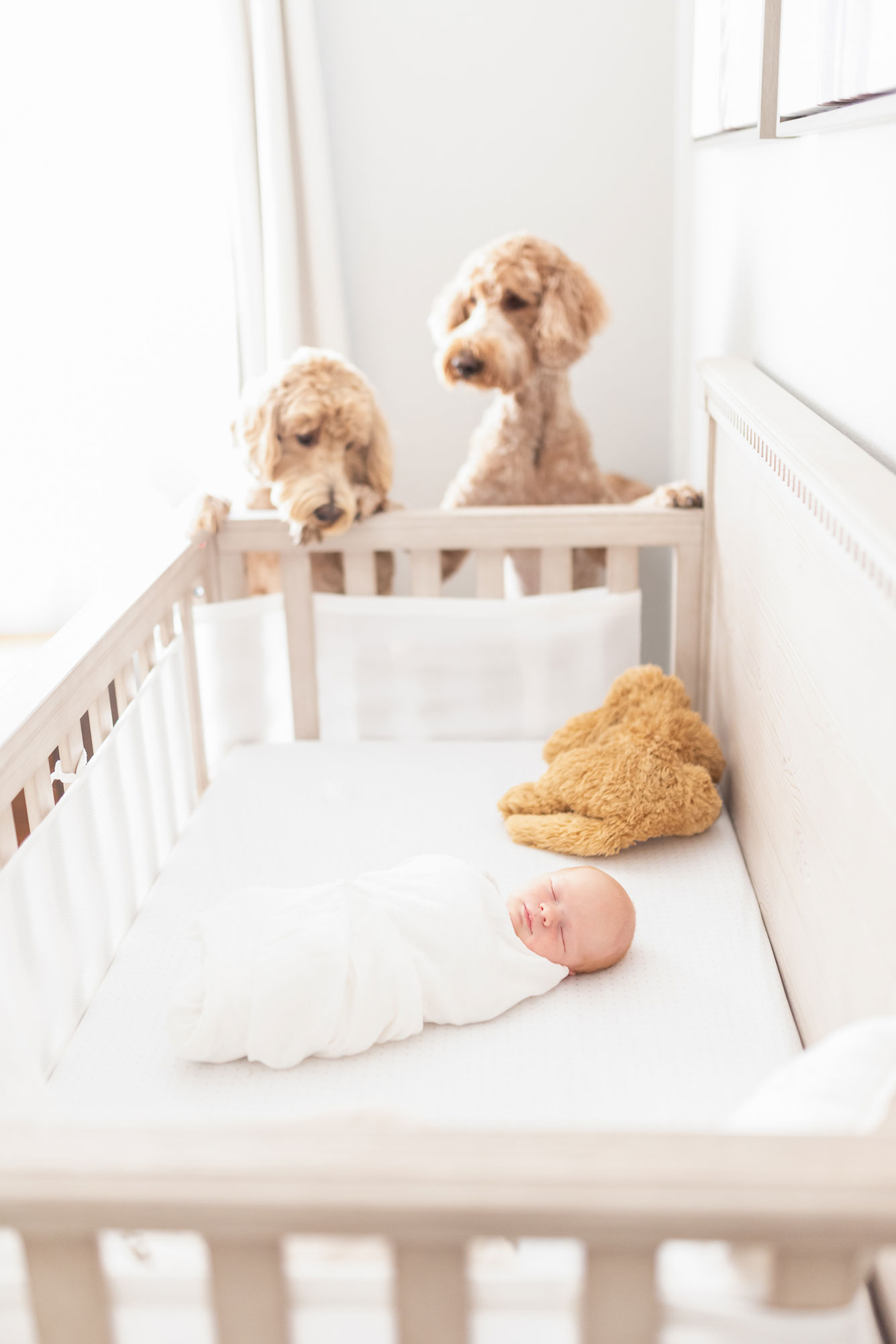 Puppies look in on new baby in crib