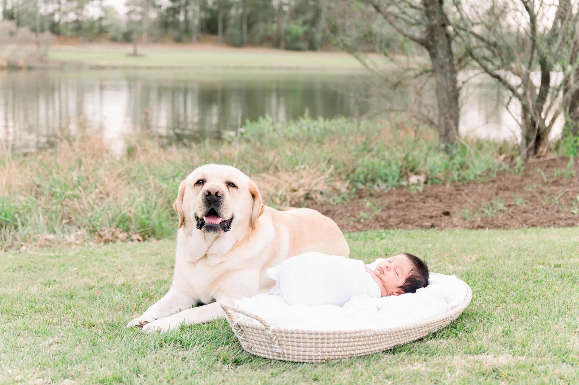 Family dog laying next to baby in Moses basket during outdoor newborn session. Photo by Aimee Hamilton Photography.