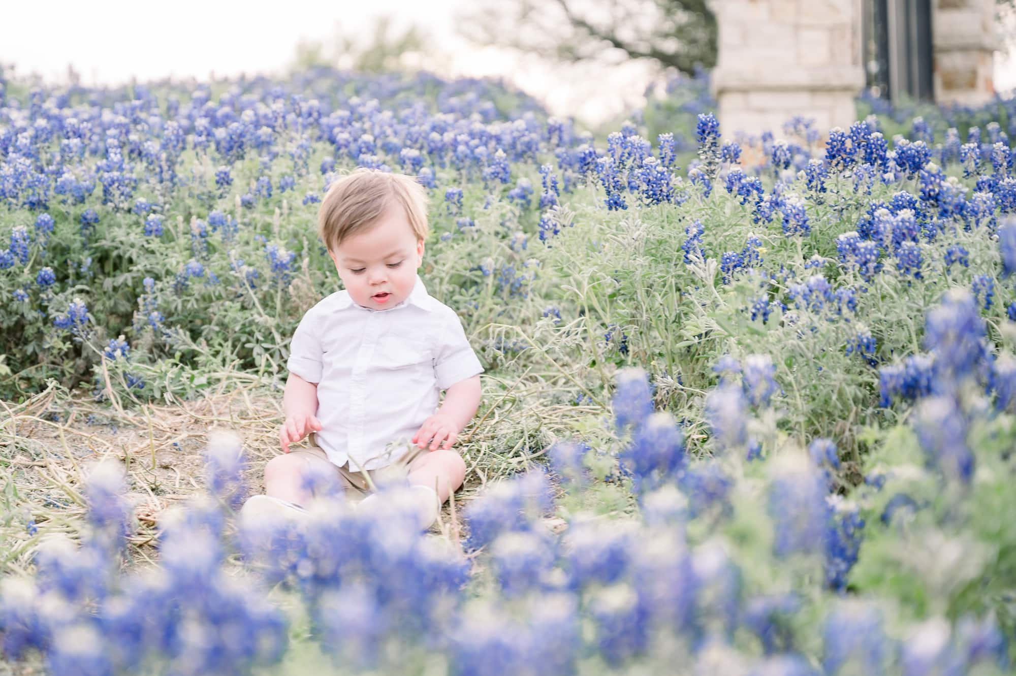 Baby boy looks down at flowers during family session by Prosper family photographer, Aimee Hamilton Photography.